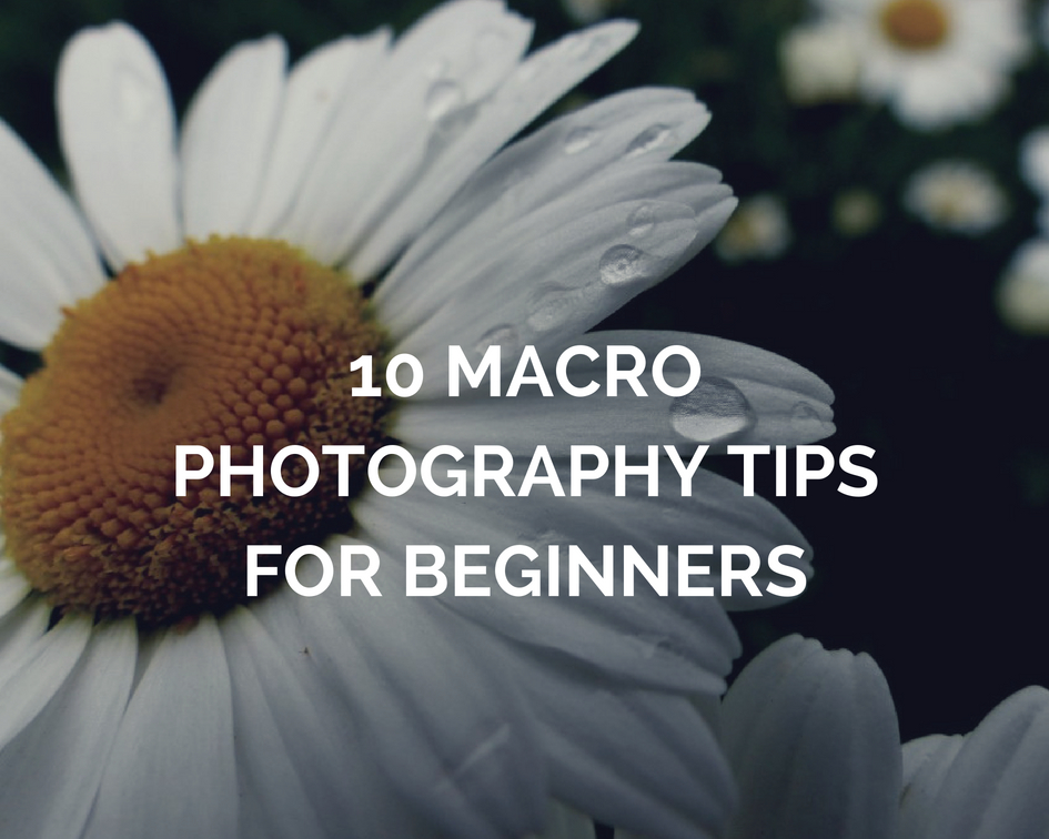 10 Macro Photography Tips For Beginners Easy Steps To Take Your The